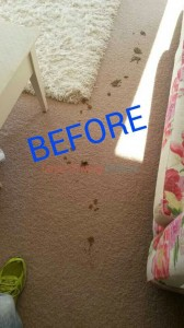 Oakland_CA_CARPET_CLEANING_020